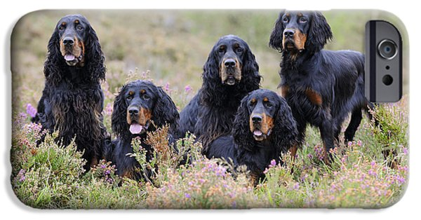 Gordon Setter iPhone Cases - Five Gordon Setters iPhone Case by John Daniels