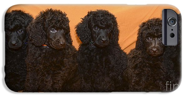 Black Dog iPhone Cases - Five poodle puppies  iPhone Case by Amir Paz