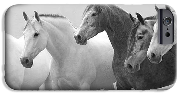Horse iPhone Cases - Five Spanish Mares iPhone Case by Carol Walker