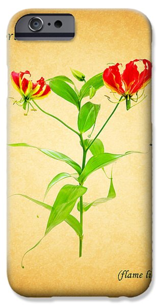 Flame iPhone Cases - Flame Lily iPhone Case by Mark Rogan