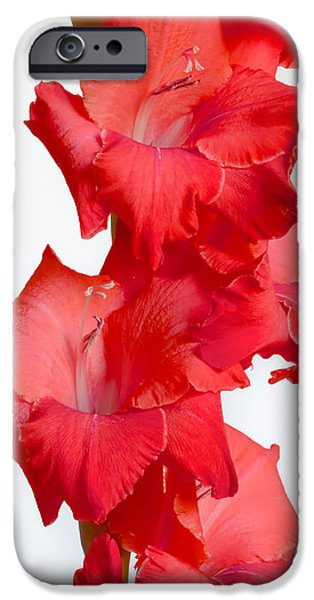 Gladiolas iPhone Cases - Flamenco iPhone Case by Heidi Smith