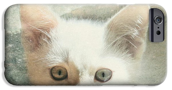 Flame Point Siamese iPhone Cases - Flamepoint Siamese Kitten iPhone Case by Pam  Holdsworth