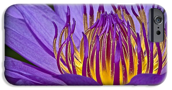 Waterlily iPhone Cases - Flaming Heart iPhone Case by Susan Candelario