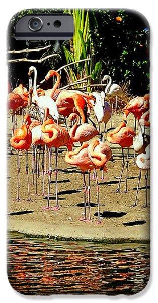 Flamingo Family Reunion iPhone Case by KAREN WILES