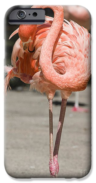 Flamingo iPhone Case by Steven Ralser