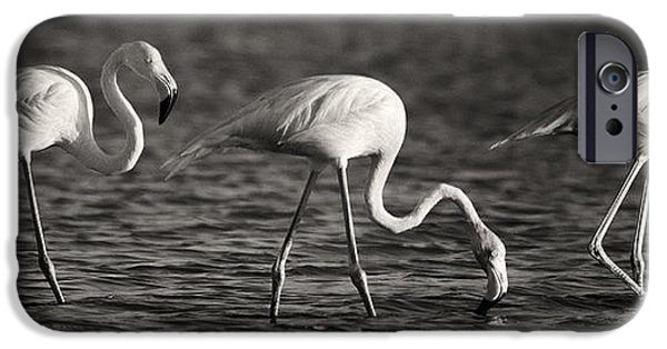 Aviary iPhone Cases - Flamingos Black and White Panoramic iPhone Case by Adam Romanowicz