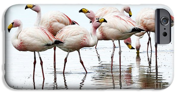 Wildlife Photographer iPhone Cases - Flamingos Bolivia 1 iPhone Case by Bob Christopher