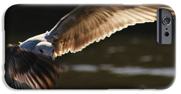 Sea Birds Pyrography iPhone Cases - Flaying At Sunset iPhone Case by Valia Bradshaw