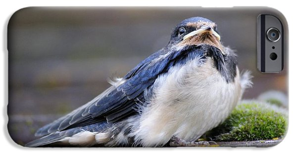 Hirundo iPhone Cases - Fledgling Swallow iPhone Case by Colin Varndell