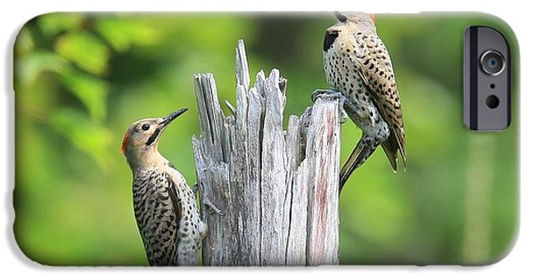 Maine iPhone Cases - Flickers iPhone Case by Donald Cramer