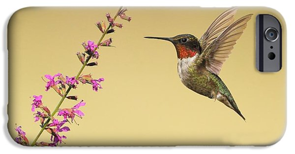 Flight Pyrography iPhone Cases - Flight of a Hummingbird iPhone Case by Daniel Behm