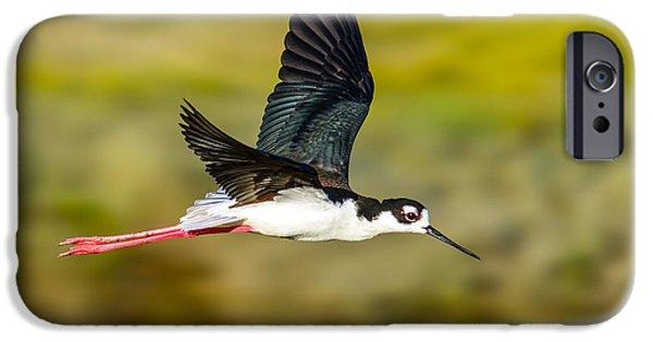 Sea Birds iPhone Cases - Flight of the Black-Necked Stilt iPhone Case by Brian Tada