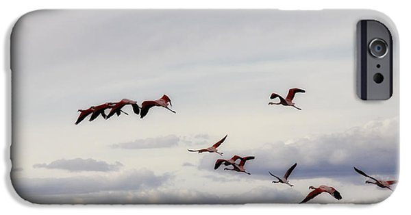 Flamingo iPhone Cases - Flight of the Flamingos iPhone Case by Mountain Dreams