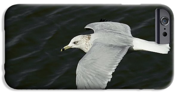 Flying Seagull iPhone Cases - Flight of the Gull iPhone Case by Ernie Echols