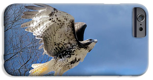 Flight iPhone Cases - Flight of the Red tail iPhone Case by Bill  Wakeley