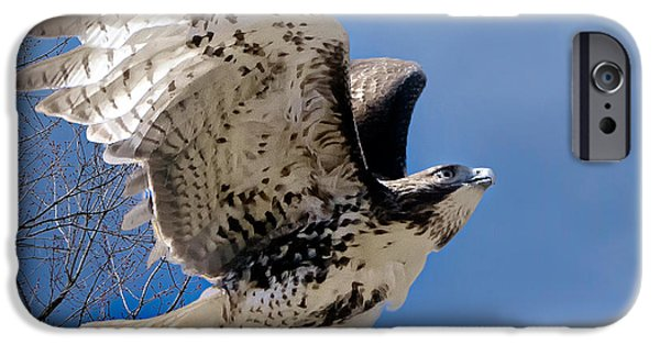 Redtail Hawk iPhone Cases - Flight of the Red tail Square iPhone Case by Bill  Wakeley
