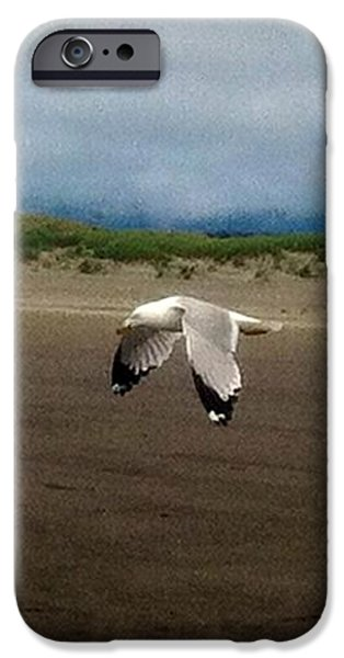 Flying Seagull iPhone Cases - Flight of the Seagull iPhone Case by Teresa A Lang
