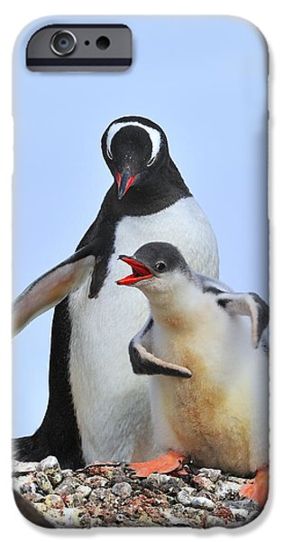 Recently Sold -  - Sea Birds iPhone Cases - Flipper Flexing iPhone Case by Tony Beck