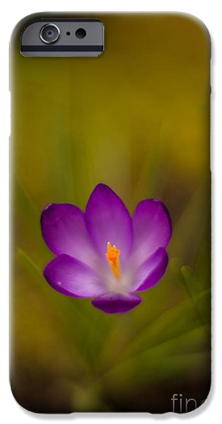 Thin iPhone Cases - Floating Bloom iPhone Case by Mike Reid