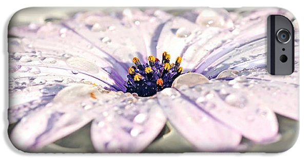 Wet Petals iPhone Cases - Floating Daisy iPhone Case by Kaye Menner