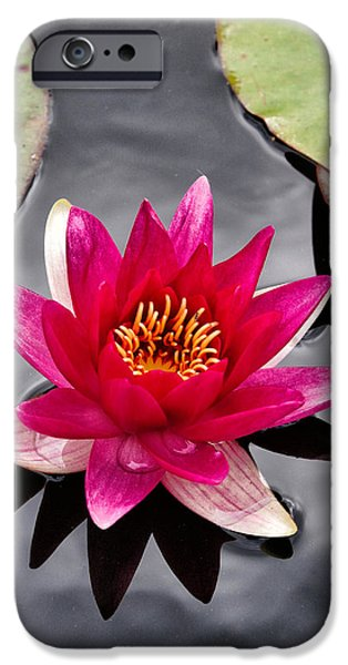 Isolated Pyrography iPhone Cases - Floating Lotus iPhone Case by Russ Dixon