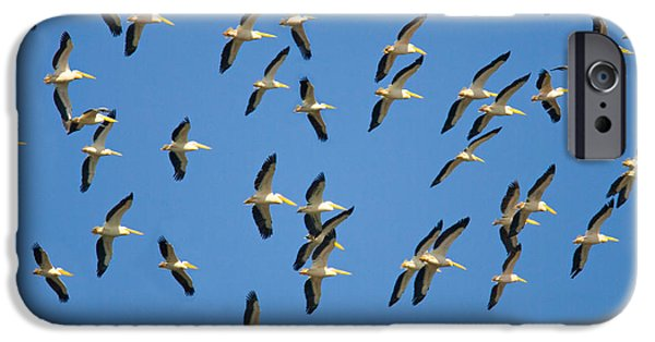 Flocks Of Birds iPhone Cases - Flock Of Birds Flying In The Sky iPhone Case by Panoramic Images