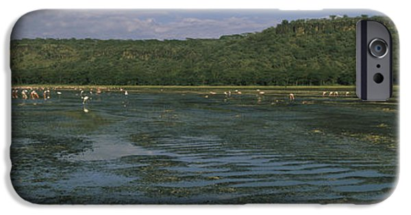 Flocks Of Birds iPhone Cases - Flock Of Flamingos In A Lake, Lake iPhone Case by Panoramic Images