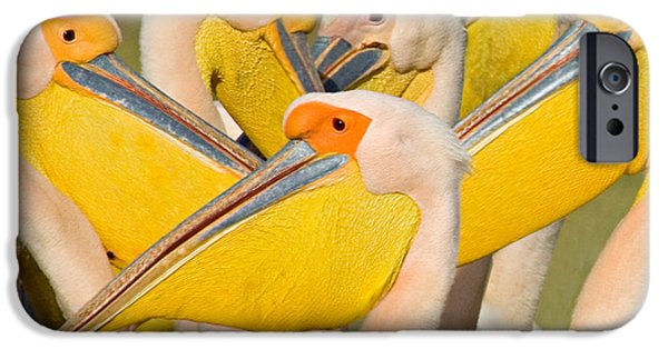 Flocks Of Birds iPhone Cases - Flock Of Great White Pelicans, Lake iPhone Case by Panoramic Images