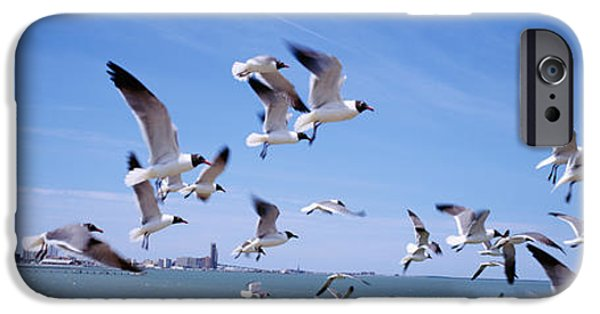 Flying Seagull iPhone Cases - Flock Of Seagulls Flying On The Beach iPhone Case by Panoramic Images