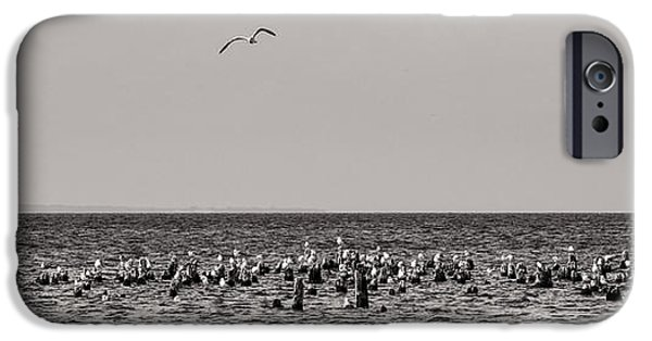 Sea Birds iPhone Cases - Flock of Seagulls in Black and White iPhone Case by Sebastian Musial