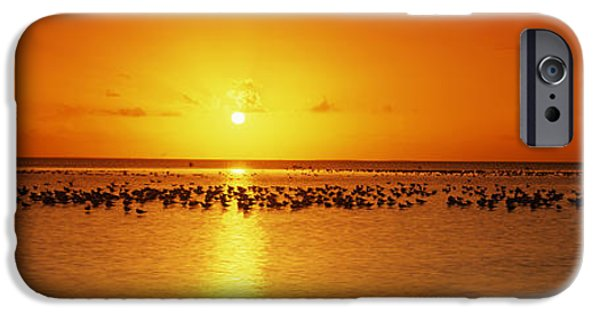 Flocks Of Birds iPhone Cases - Flock Of Seagulls On The Beach iPhone Case by Panoramic Images
