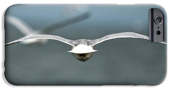 Flying Seagull iPhone Cases - Flock Of Seagulls iPhone Case by Richard ONeil