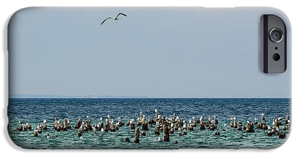 Birds iPhone Cases - Flock of Seagulls iPhone Case by Sebastian Musial
