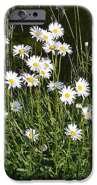 Flora and Fauna iPhone Case by John Tidball