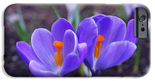 Daughter Gift iPhone Cases - Floral Garden Purple Crocus Flower Art Prints iPhone Case by Baslee Troutman