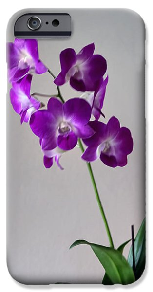 Artistic Photography iPhone Cases - Floral iPhone Case by Tom Prendergast