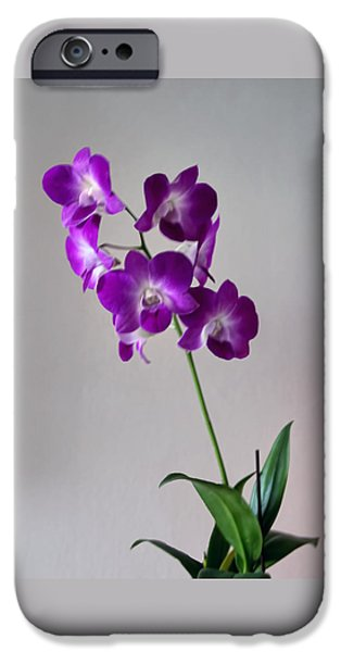 floral iPhone Case by Tom Prendergast