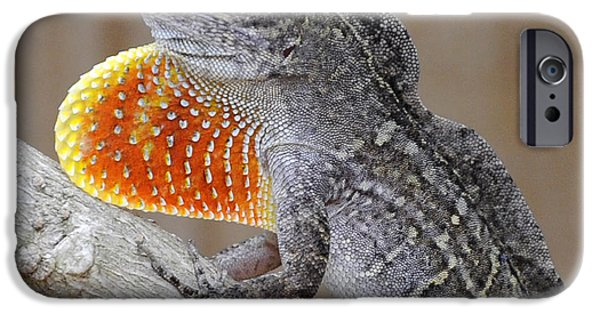Florida Wildlife iPhone Cases - Florida Anole with Orange Dewlap iPhone Case by Rebecca Brittain