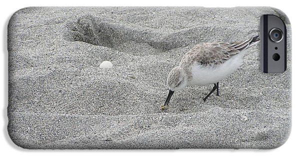 Marine Pastels iPhone Cases - Florida Bird iPhone Case by Tracy L Teeter