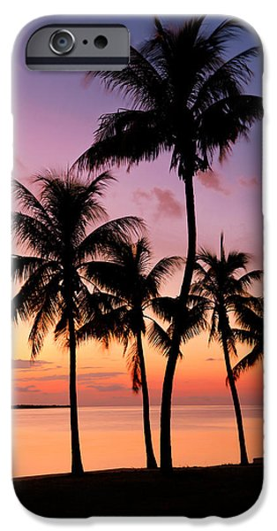 Palm Tree iPhone Cases - Florida Breeze iPhone Case by Chad Dutson