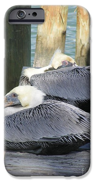 Fishing Pastels iPhone Cases - Florida Brown Pelicans iPhone Case by Tracy L Teeter