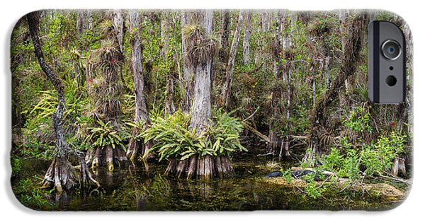 National Preserves iPhone Cases - Florida Everglades Tropical Landscape - Big Cypress Swamp iPhone Case by Bill Swindaman