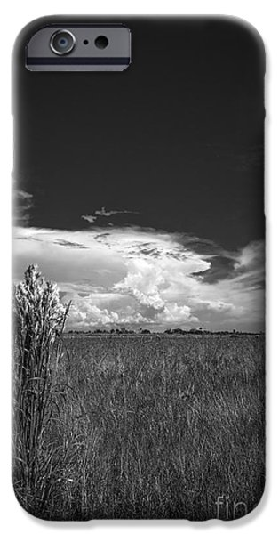 Sand Dunes iPhone Cases - Florida Flat Land iPhone Case by Marvin Spates