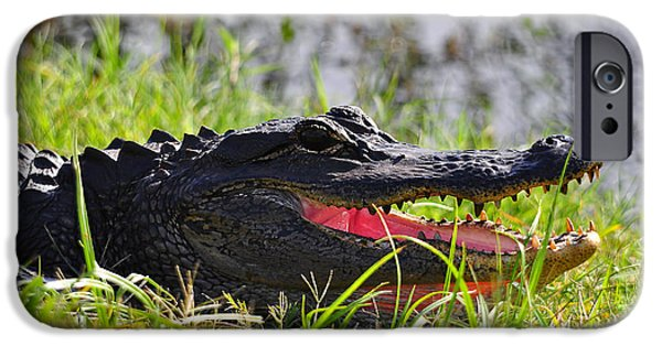 Alligator iPhone Cases - Gator Grin iPhone Case by Al Powell Photography USA
