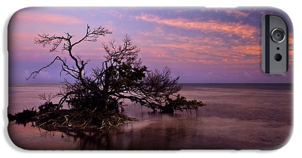 Mangrove iPhone Cases - Florida Mangrove Sunset iPhone Case by Mike  Dawson
