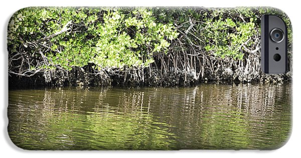Mangrove Forest iPhone Cases - Florida Mangroves iPhone Case by Andrea Hazel Ihlefeld