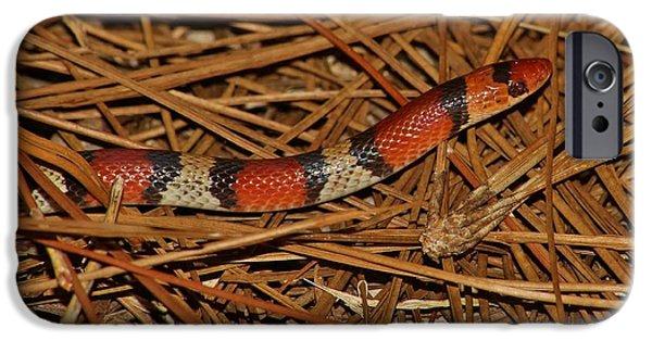 Lynda Dawson-youngclaus Photographer iPhone Cases - Florida Scarlet Snake iPhone Case by Lynda Dawson-Youngclaus