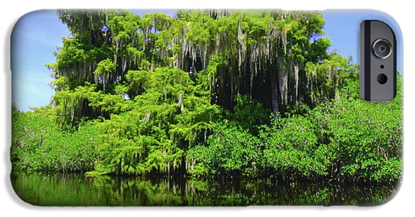 Wild Trout iPhone Cases - Florida Swamps iPhone Case by Carey Chen