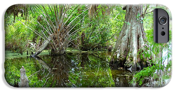 Alley iPhone Cases - Florida Wetland iPhone Case by Carey Chen