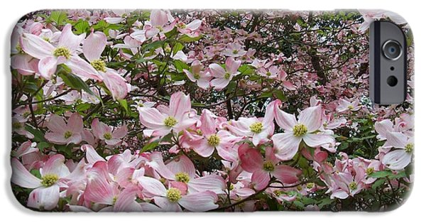 Living With Joy iPhone Cases - Flourishing Pink Magnolias iPhone Case by Deborah  Montana